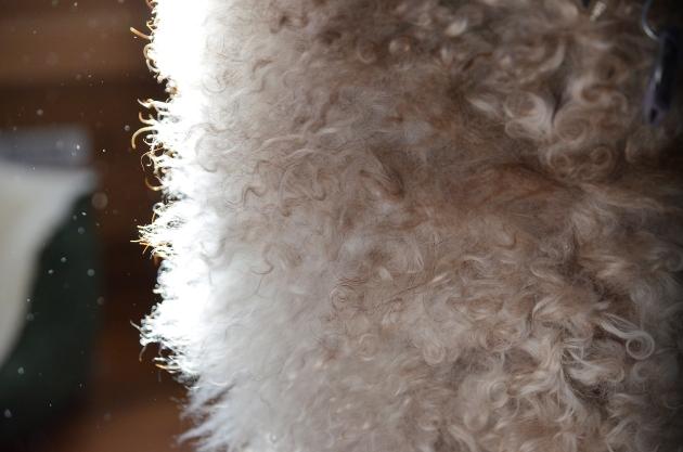 Week 10 furry